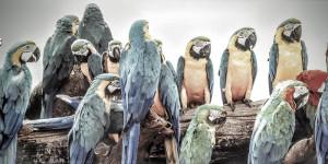 Macaw bird bunch