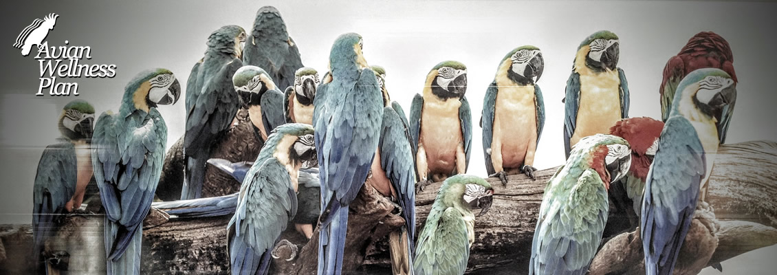 Macaw bird bunch